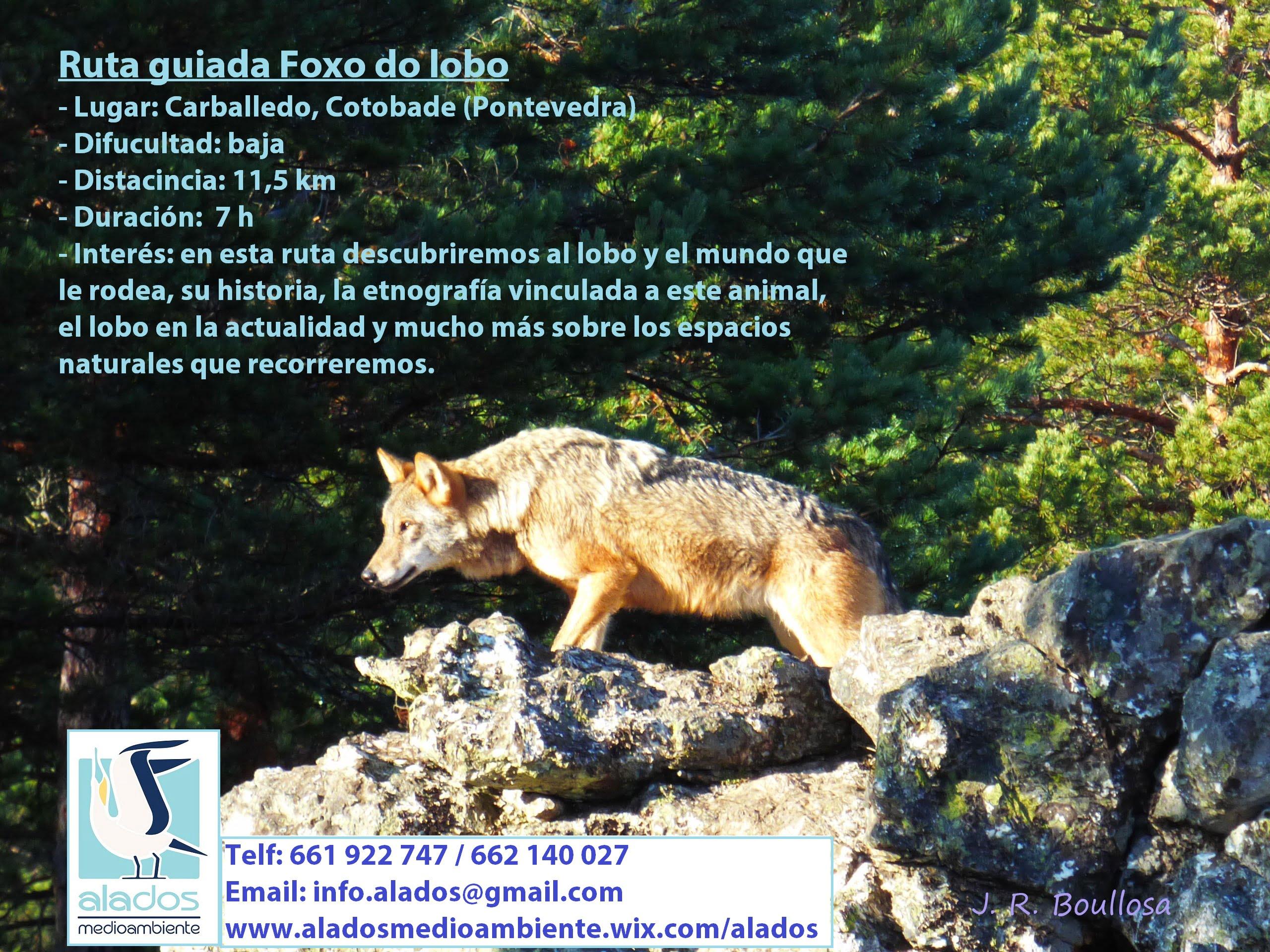 Roteiro do Foxo do Lobo