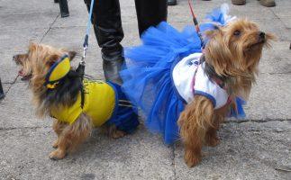 Desfile Canino Solidario 2018   Vigo