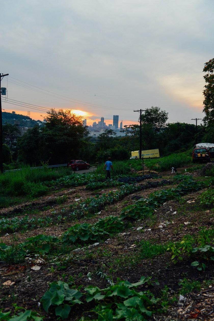Hazelwood Urban Farms // www.Quelcy.com