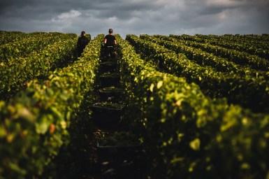 Reportage sur les vendanges en Champagne