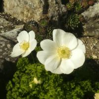 Les prémices du printemps !