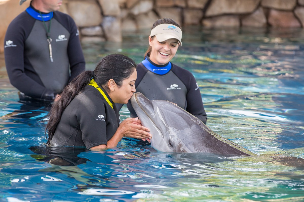 Swimming with the Dolphins at Discovery Point Sea World San Antonio