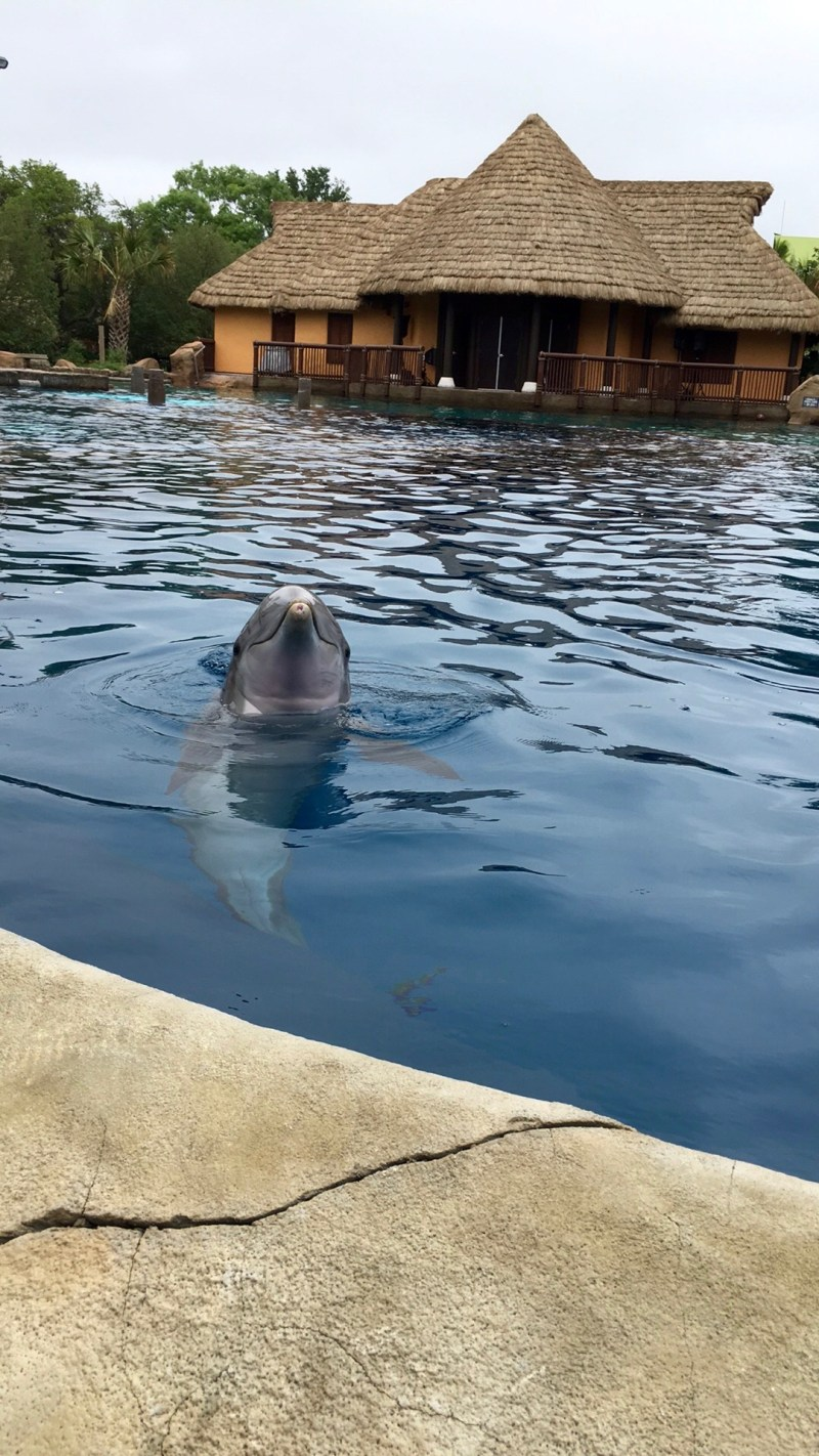 The Dolphin Lagoon at Sea World