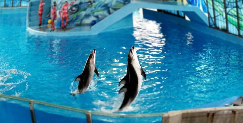Azul Show at Beluga Staduium Sea World Spooktacular San Antonio - QueMeansWhat.com