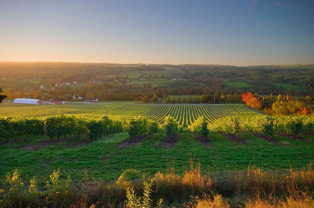 Gaspereau_Vineyard_Sunlight