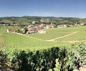 Burgundy Detour Konrad Ejbich
