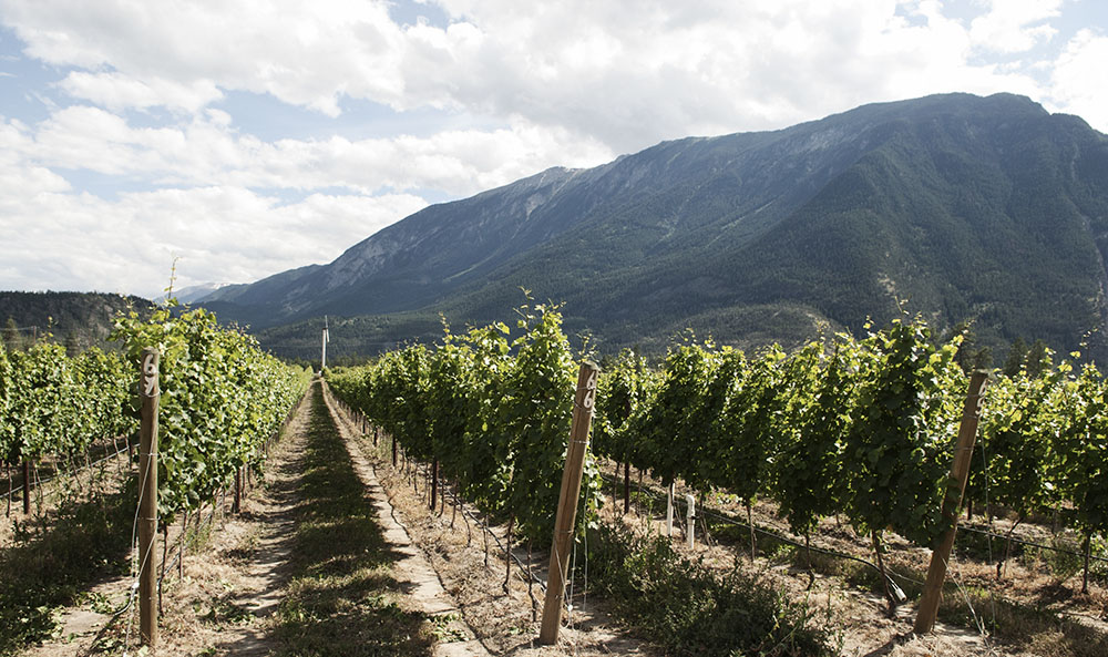 BC Riesling: Fort Berens Vineyard