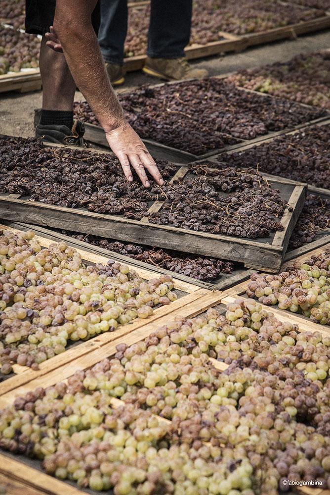 Donnafugata Appassimento grapes