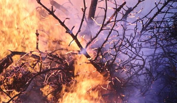 Incendios forestales en Ecuador