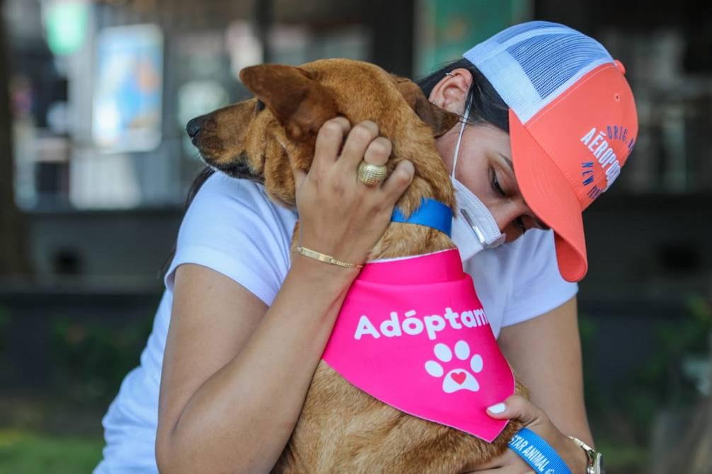 Campaña de adopción