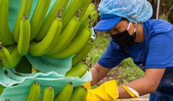 paro de bananeros