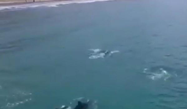 Delfines en Crucita