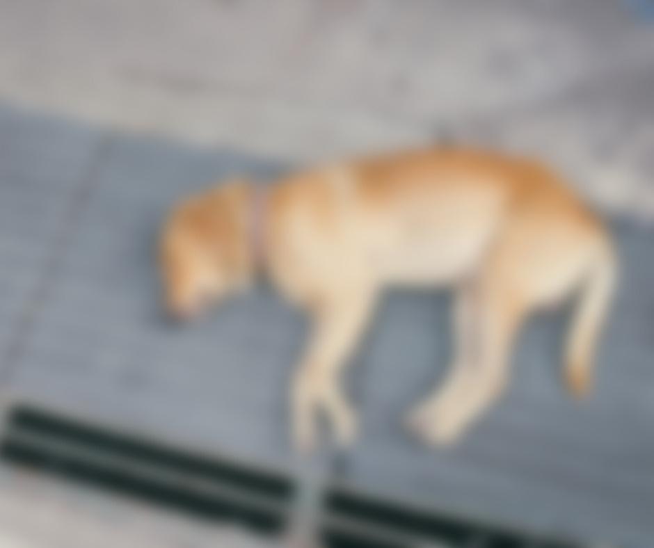 perros envenenados en quito