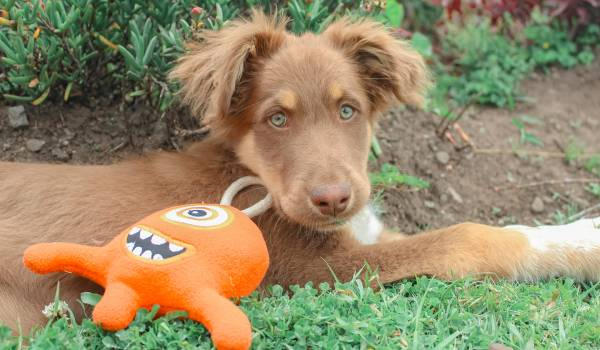 juguetes para mascotas alku
