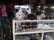 Pups for sale at Ferria Libre, means Free Fair in espanol. Used to be free for vendors to have stalls here, not anymore...
