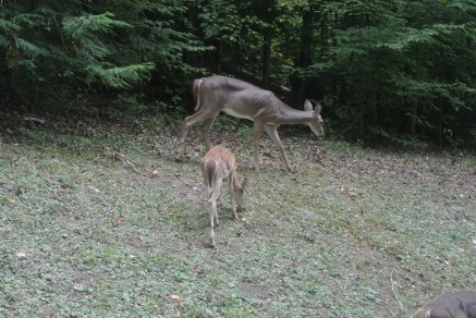 Momma and baby deer