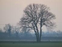 Tree on the FEns