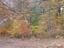 Clumber in Autumn