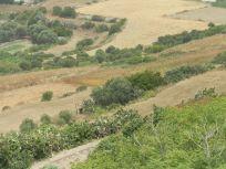 CActus hedge Malta