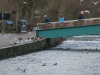 The Padlock Bridge