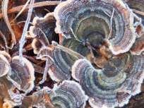 Fungus close-up