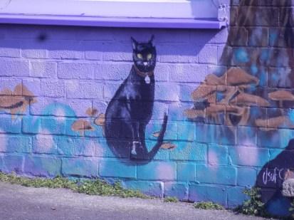 Cat at Sherwood