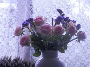 Roses from Aldi