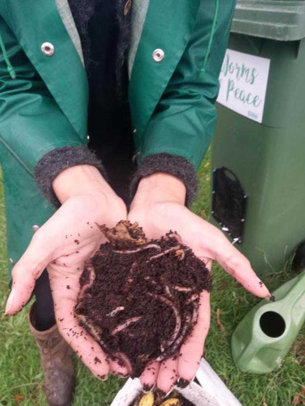 Worms at Mencap Garden, Wilford, Nottingham