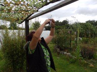 Julia attaching shade netting