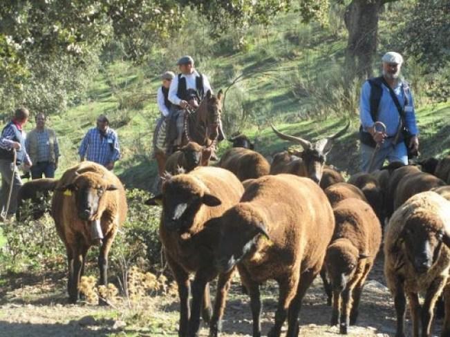 Desplazamiento del ganado