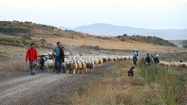 Trashumancia en España