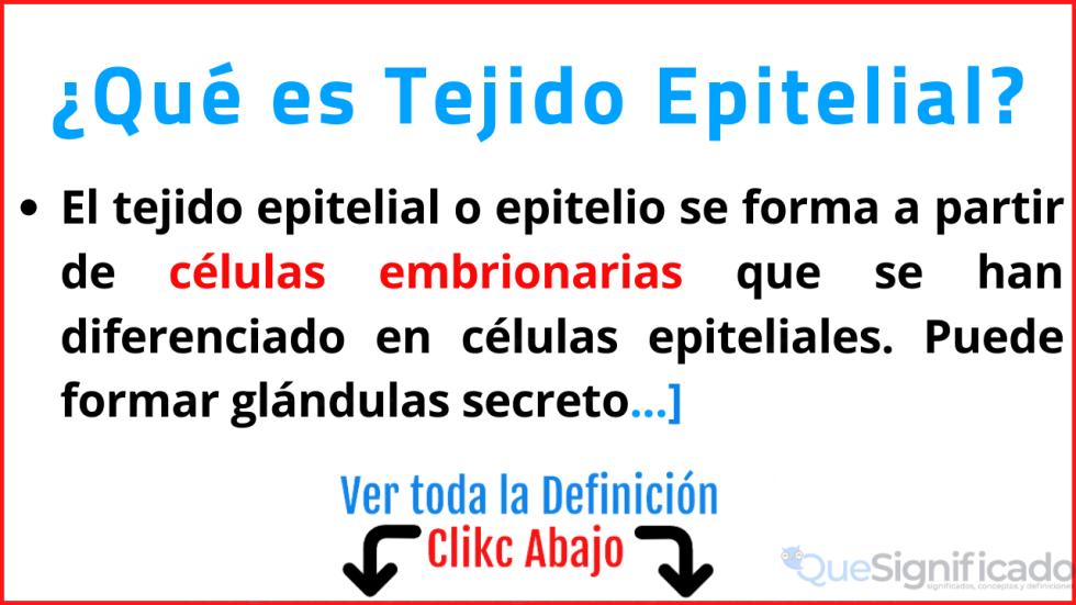 que es tejido epitelial significado definición características ejemplos tipo