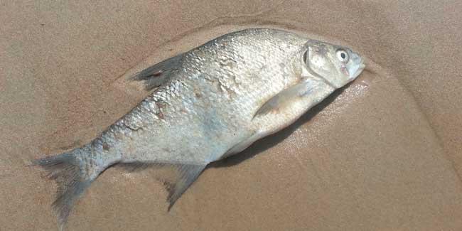 Soñar con peces que se mueren