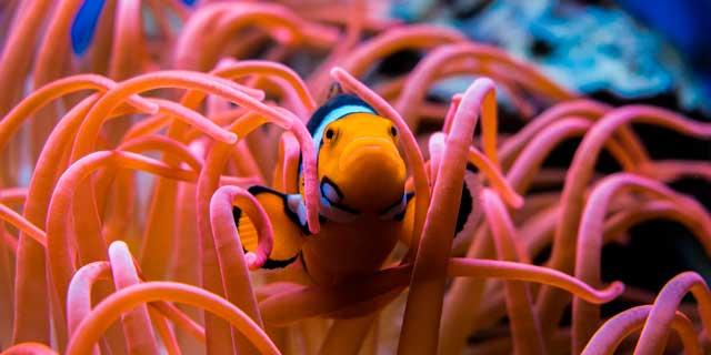 Soñar que soy un pez