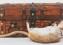 Soñar con ratones muertos