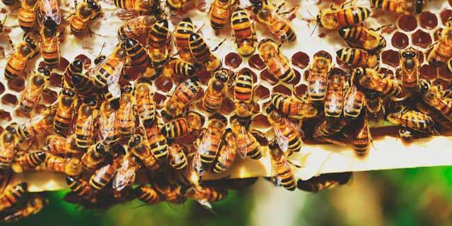 Soñar con muchas abejas