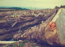Soñar con árboles caídos