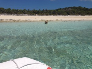 Pig Beach at Staniel Cay