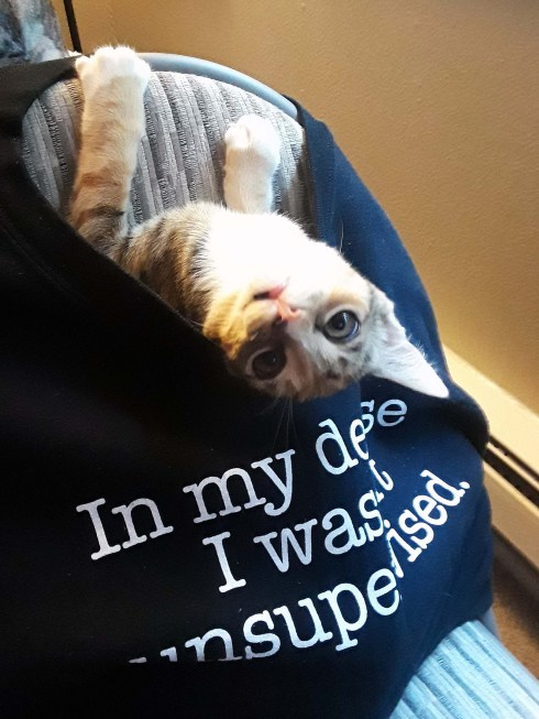 "Cat in a sweatshirt with text ""In my defense I was left unsupervised"""