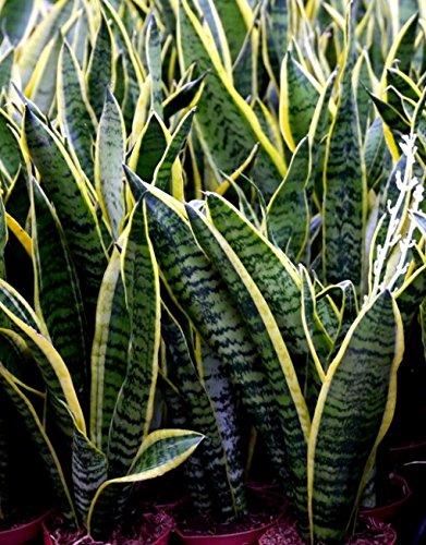 Quali piante in camera da letto questioni di arredamento - Piante che purificano l aria in camera da letto ...