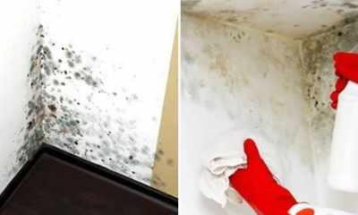Eliminare le macchie di muffa alle pareti.