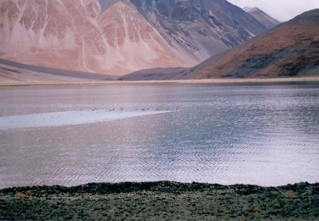 wilderness vacations in ladakh(6)