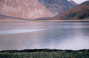 Wilderness vacations in Ladakh(6)
