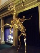 Skeleton Rider. Sydney Museum