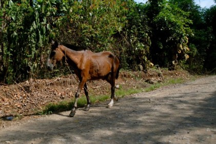 Quading: Quepos, Costa Rica travel with Sherry as she adventures all over Costa Rica.