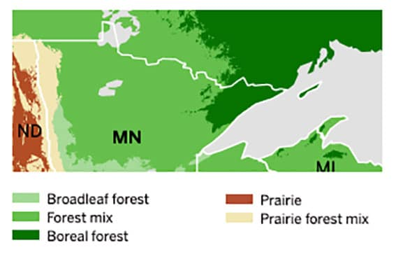 Timber quotas can be issued within alberta's green area and white area and can exist within (or on) the lands that comprise a forest management agreement. Boreal Birding In The Bogs Of Northern Minnesota Quetico Superior Wilderness News