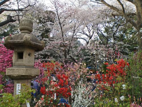 Jardines a la entrada del Santuario Yasukuni