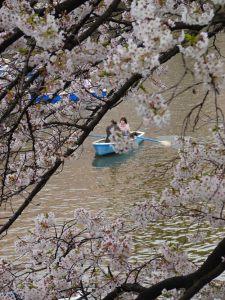 Lago del Parque Kitanomaru
