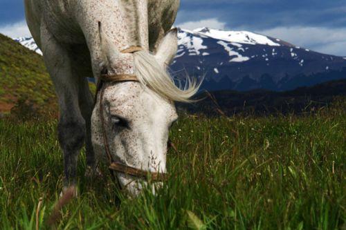 Flora y fauna del Parque Nacional Torres del Paine