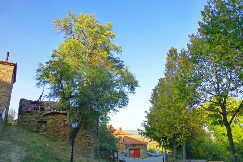 Peral de La Hiruela, Árbol Singular de la Comunidad de Madrid